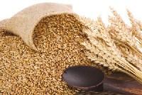 Thực phẩm giảm viêm loét dạ dày – Mạng thông tin y học và sức khỏe cộng đồng