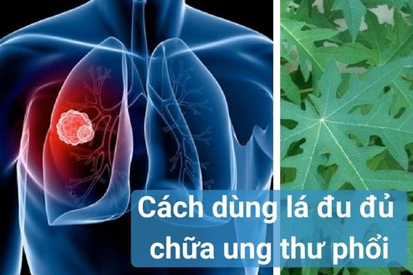 Cách dùng lá đu đủ chữa bệnh ung thư phổi